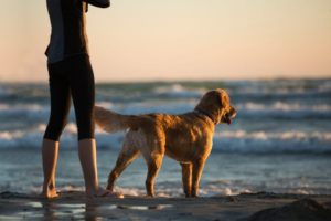 Sea Vegetables and Their Health Benefits for Dogs